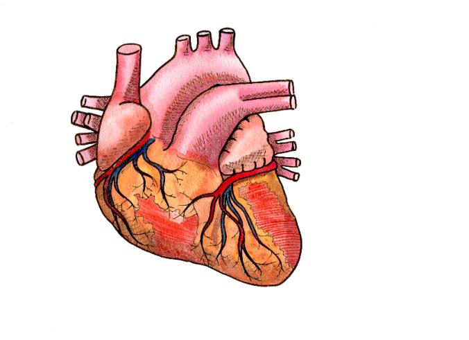 Helen's Heart